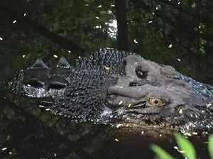 Albert, 4m pet crocodile, survives home inferno
