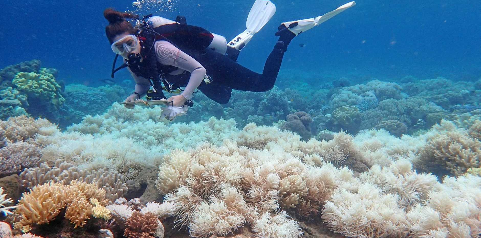 Bleaching damage on the Great Barrier Reef is being assessed after back-to-back bleaching events in the past two years.