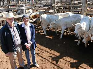 Demand for local young cattle drives up prices