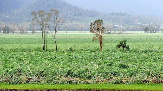 Cyclone Debbie flattened cane crops across north Queensland. Mackay was certainly no exception, with growers facing losses of up to 30%.