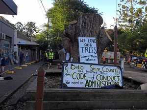 Arrests made as iconic Bellingen trees cut down