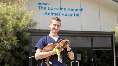 Vet nurse, Dylan Gerard at the Lorraine Hannah Veterinary Hospital at RSPCA headquarters in  Brisbane