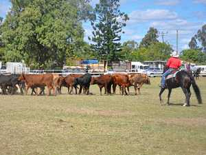 Community steps in to rescue campdraft