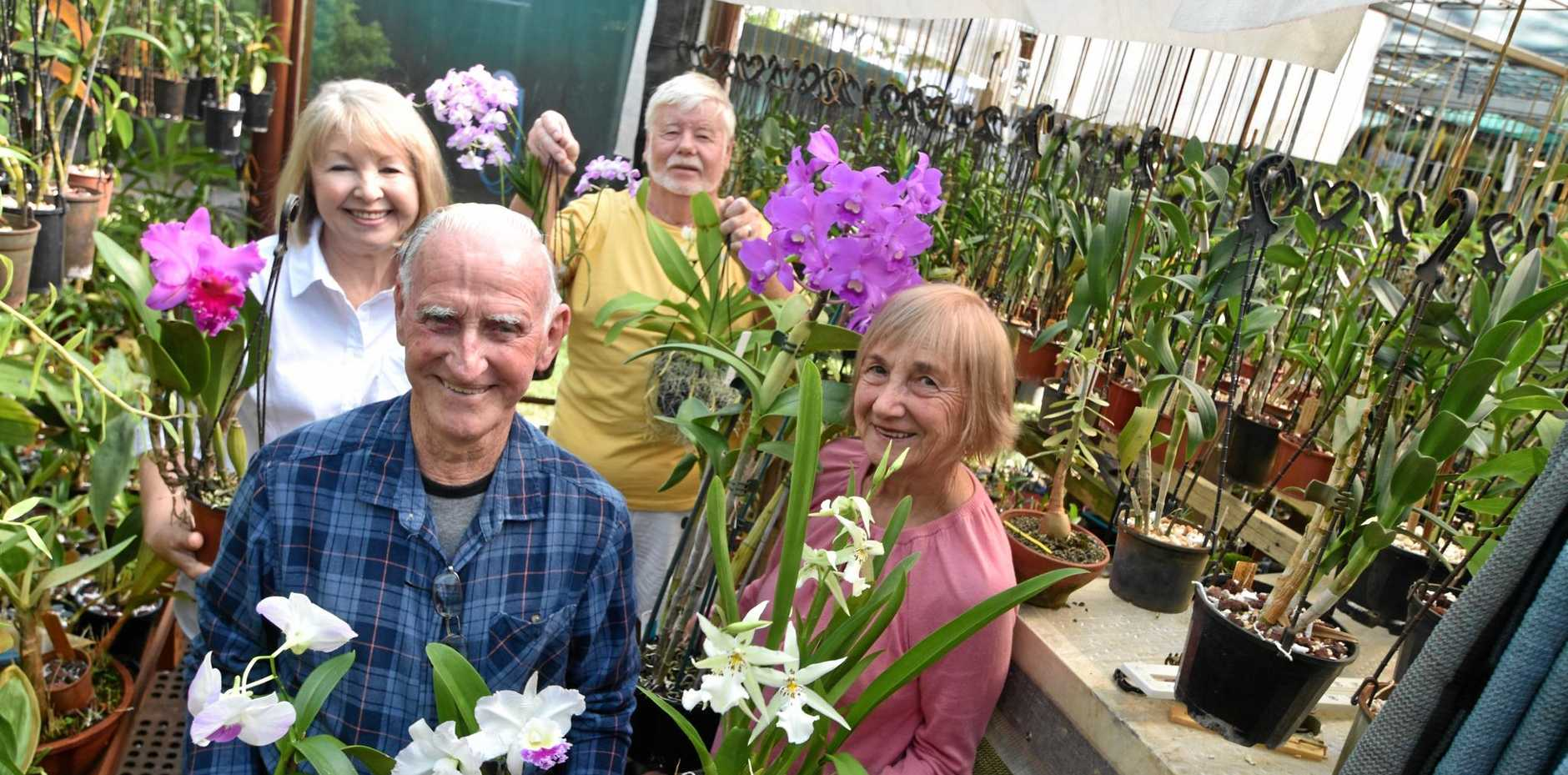 BLOOMIN' LOVELY: Members of Ballina Orchid Society remind people of their Mother's Day Show at Ballina Fair this weekend.