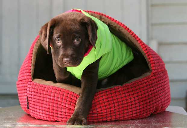 Keep your dog amused with these hi-tech options. Picture: Rob Williams.