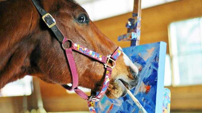 Metro the painting horse gets down to business.