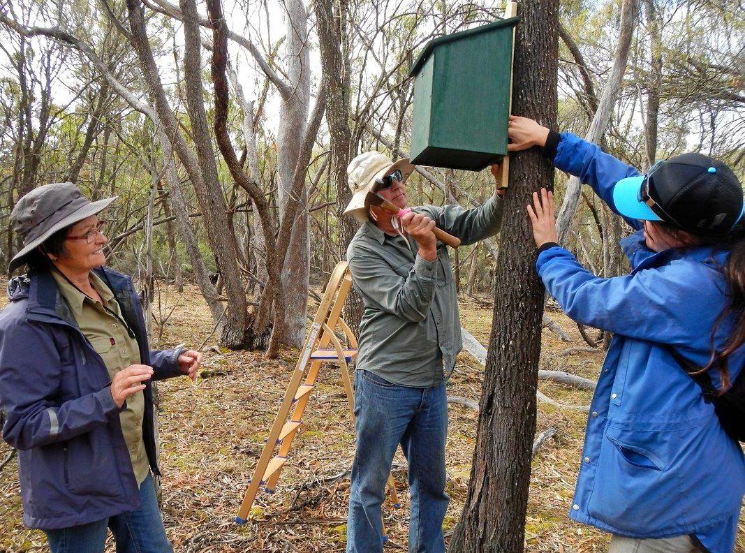 GO GREEN: Volunteers help ecologist Angela Sanders set up new phascogale nesting boxes on Kojonup Reserve, West Australia.