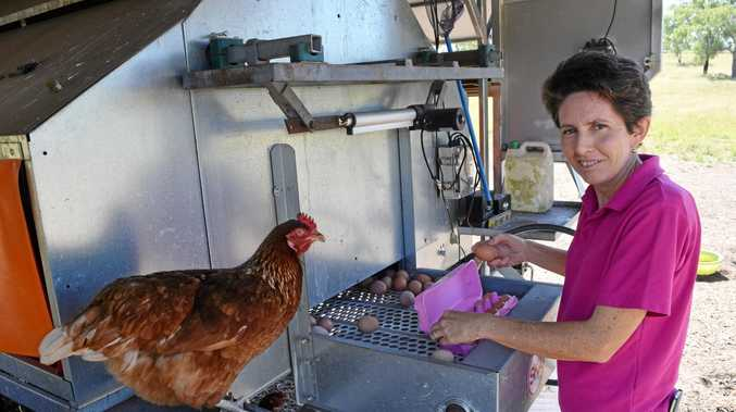 HAPPY CHOOKS: Brenda Lipsys checks for eggs every morning and night from her free-range chickens.