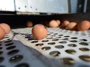 Salmonella egg farm says 'not my fault bro'