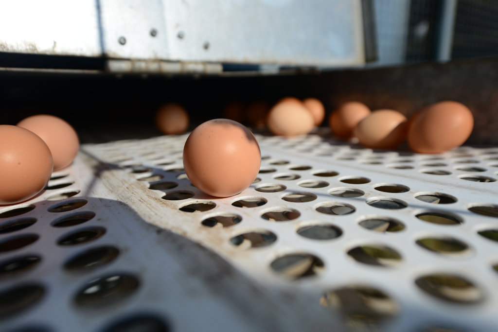 Consumers have been advised to either bin the eggs or return them to the place of purchase for a full refund.