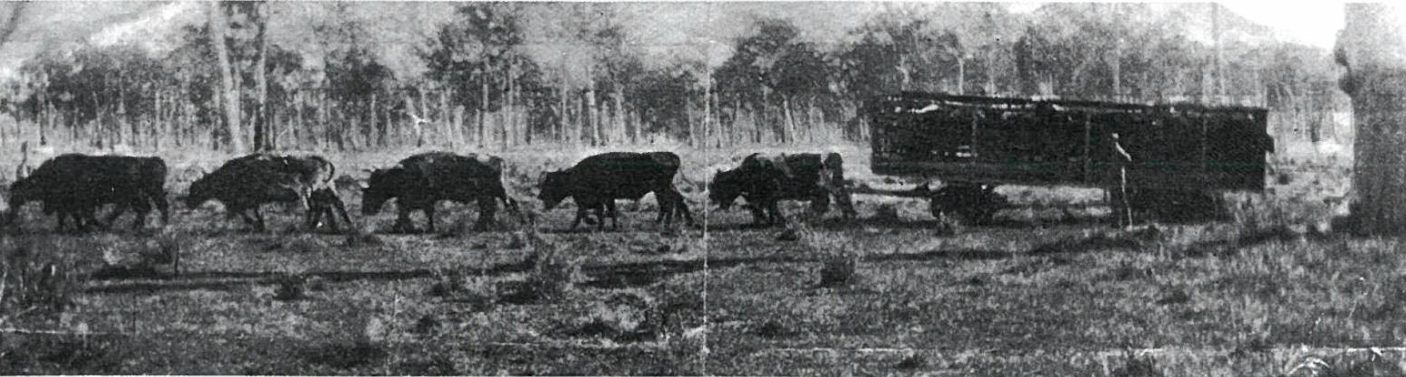 Historic image of the crate JJ Galloway built in 1931 to transport 15 head of show cattle to Pomona railhead, near Noosa.