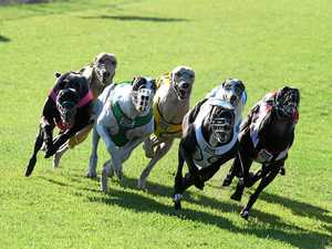 Jobs advertised to lead greyhound reform