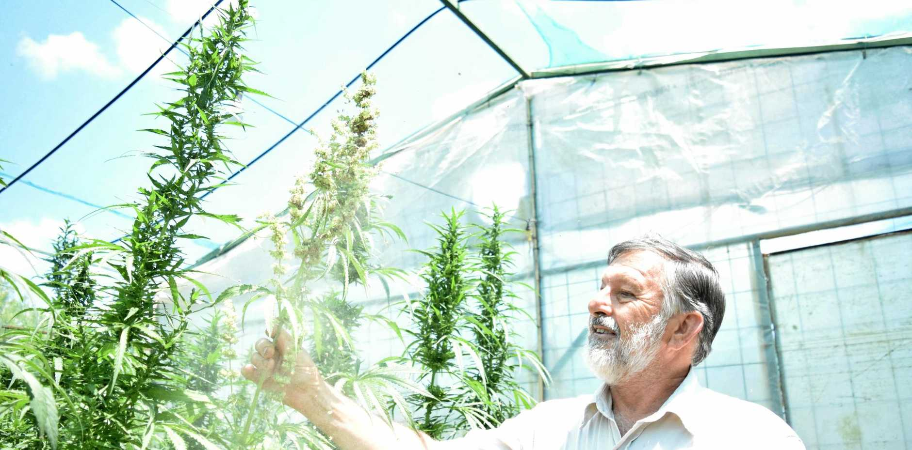 FIELDS OF GREEN: John Hall is hoping to be able to grow medicinal cannabis on his Bundaberg farm next year.