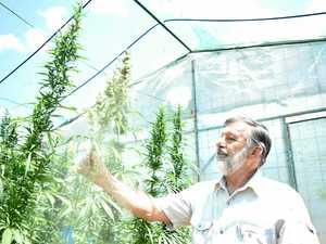 Bundy man leading medicinal pot boom