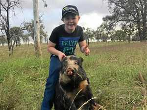 Family fun day of hunting pigs for $10k in prizes
