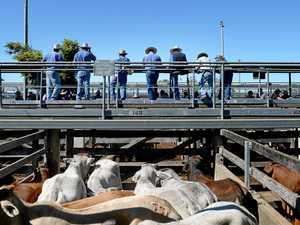 Cattle sale cancelled following strike on charges