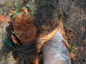 Residents quizzed as chopped trees give mystery sea views