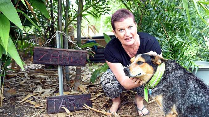 Pacific Haven's Kim and Kym Richards believe someone has left baits for their dogs to discover, following the traumatic deaths of their jack russells, Tarzi and Zarli.  Pictured with Sixpack.