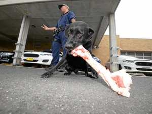 Drug detection dog given an emotional farewell