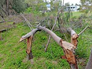 Trees chopped down at Blacks Beach