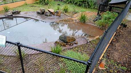 Rockhampton Zoo fresh water crocodile enclosure.