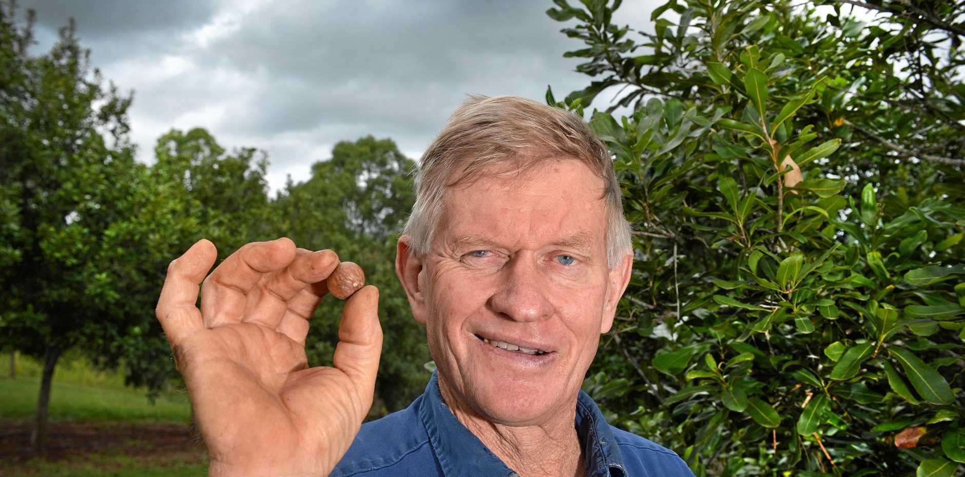 GOOD PRICES: Imbil macadamia grower Ken Ward says a tough season has been balanced by good prices for the Gympie region's most famous bush tucker export.