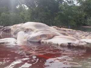 Sea Monster washes up on Indonesian Coast
