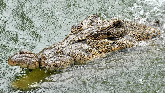 Supplied undated photo obtained Wednesday, Dec. 22, 2010 of Charlie the Crocodile, whose owner is facing a legal battle to keep him, swimming in his pool on the Casey family's cane farm south of Proserpine, North Queensland.  John Casey, 49, was just two years old when Charlie joined his family as a six-inch hatchling after her mother was shot by a hunter in 1963 and is now receiving a long list of demands from state government if he wants to keep Charlie at home. (AAP Image/Townsville Bulletin) NO ARCHIVING, EDITORIAL USE ONLY