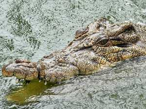 """CROC DEBATE: """"Shooting them is just the easy way out"""""""