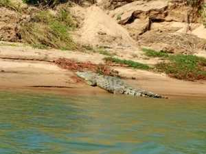 WATCH: Huge crocodile spotted sunbaking near anglers