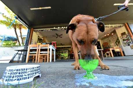 Dog Friendly Cafes Caloundra