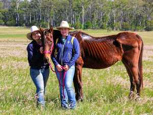 Abandoned and starved horse rescued near Gympie