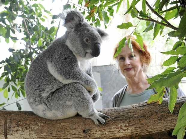Every day has been 'Koala Day' for the last 15 years for Friends of the Koala president Lorraine Vass.