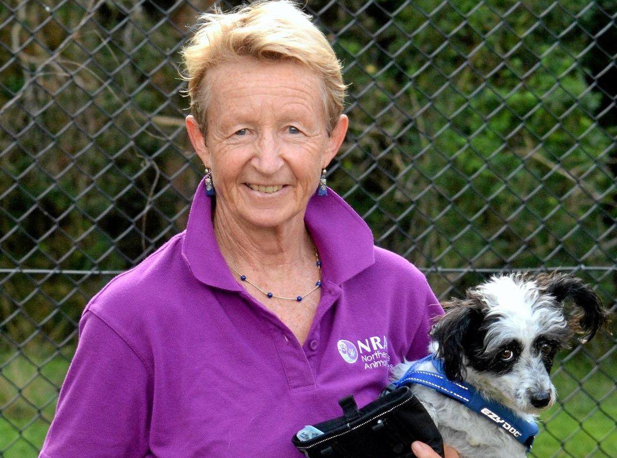 ANIMAL SERVICES: Dog co-ordinator Trish Giltinan makes Sawyer and Blossy feel welcome.