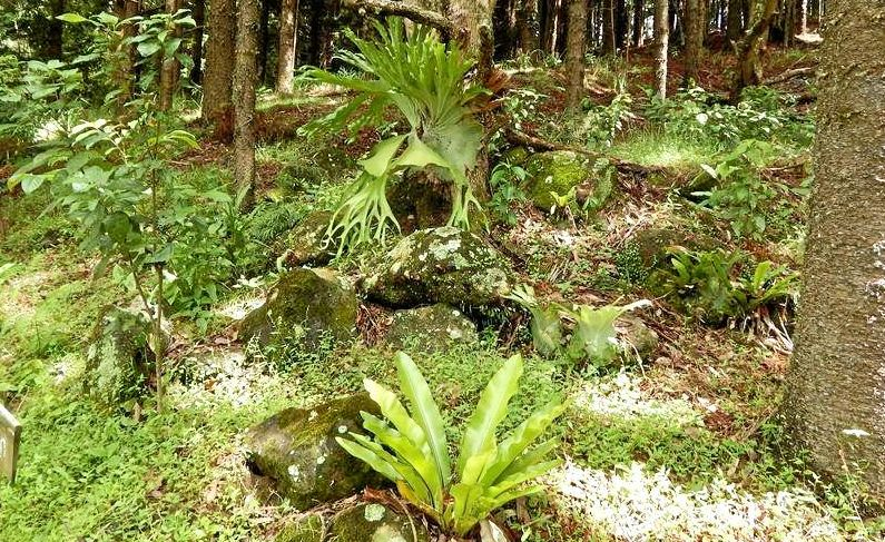 NATURE WALK: Come along to the Lismore Rainforest Botanic Gardens open day.