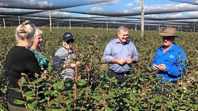 RDA committee touring the Smart Berries farm outside Mundubbera.