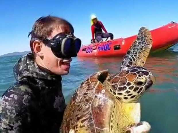 A team of researchers checked on turtle population off the coast of Bowen.