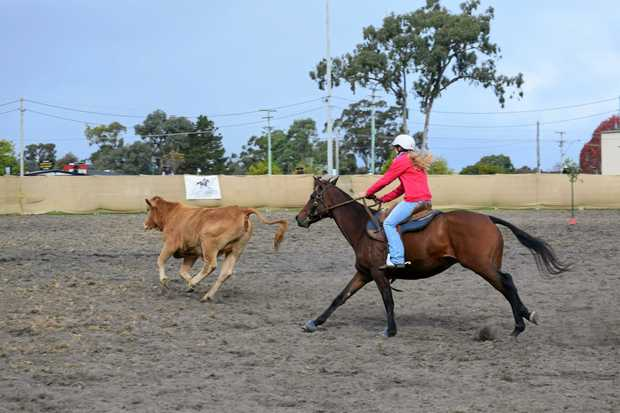CHASING POINTS: Stanthorpe Campdraft on Saturday.