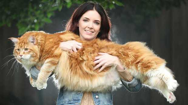 Massive cat set to break a Guinness World Record
