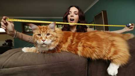 Omar, perhaps world's longest cat, finds internet fame