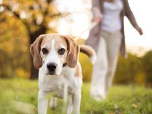 10 rules pet owners need to know to avoid hefty fines