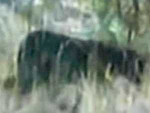 Leopard sighting recorded near popular holiday spot