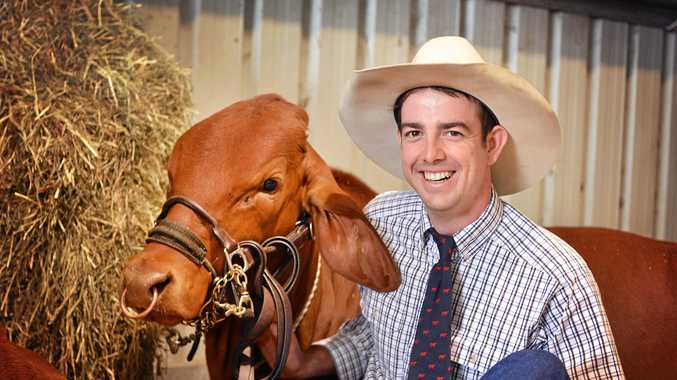 FEATURE BREED: Young Tamaree grazier Chris Turner, of Maunsell Park Droughtmasters, with stud entrant Maunsell Park Holy Dolly, competing in this year's Gympie Show.