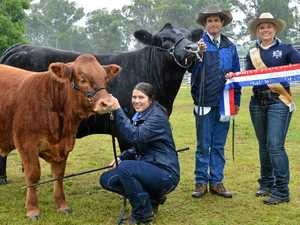 Stud cattle winners from the Gympie Show
