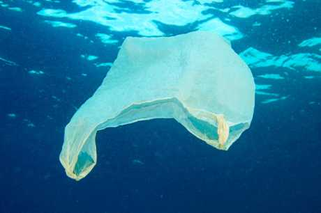 Plastic bags have a significant impact on marine life.