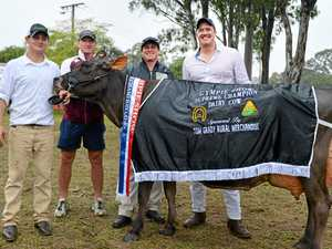 All the winners of the Dairy Cattle section at the Gympie Show