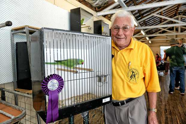KEN'S KINGDOM: Ken the 32-year-old champion parrot, father of Houdini, is the pride and joy of owner Terry White.