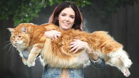 Look, we're not sure if world's longest cat contender Omar and his owner Stephy Hirst live in rental accommodation. We really just wanted to excuse to publish his picture.