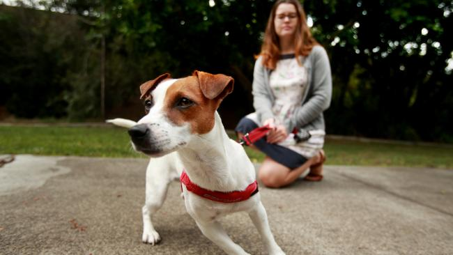 Jack Russell Lucy is lucky enough to live in a student sharehouse, where tenants including Maddy Rochford, share the care.