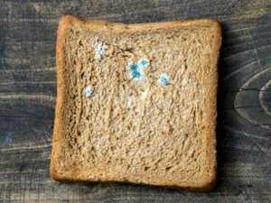 The truth about mouldy food